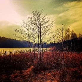 Långsjön. Tidig morgon.